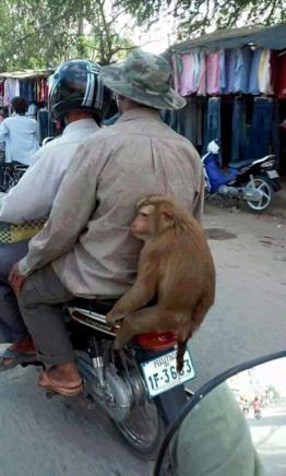 A Monkey on a Moto