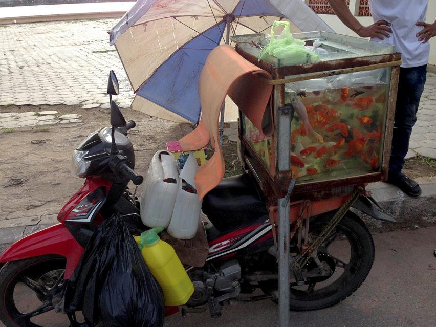 Fishmobile