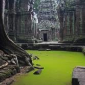 Stunning Photograph of Ta Prohm Temple