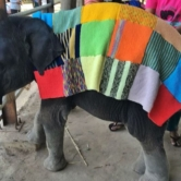 Cold Snap in Cambodia : SAVE ELEPHANT FOUNDATION