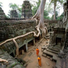 Ta Prohm, The Roots Looks Like They Are Writing In Khmer Script