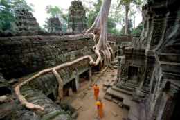 Ta Prohm, The Roots Looks Like Khmer Script