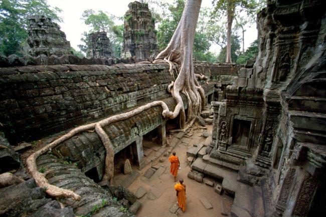 Ta Prohm, The Roots Looks Like Khmer Script